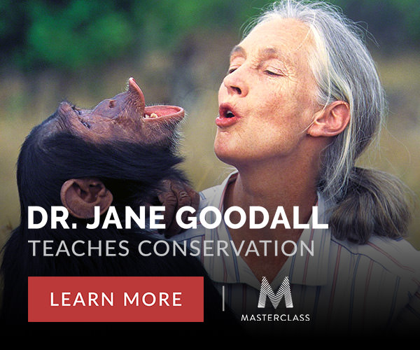 Online courses by Jane Goodall